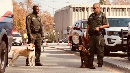 Yoshi and Nala bomb sniffing dogs with their handlers